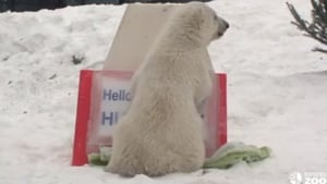 polar-bear-name