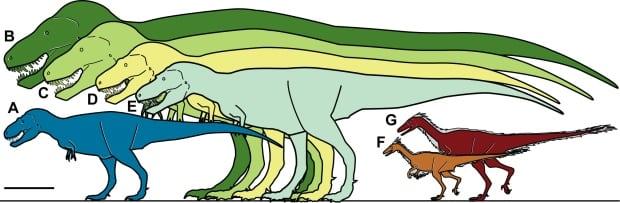 Tyrannosaur sizes