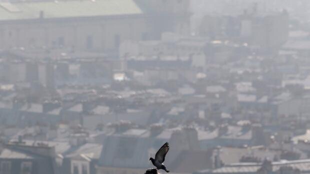 A pigeon is perched at the Saint Vincent de Paul church as smog cloaks Paris.