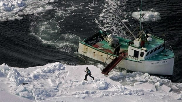 A hunter heads towards a harp seal during the annual East Coast seal hunt in this 2009 file photo.