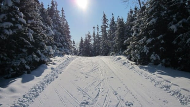 File photo: This photo is one of the Airport Nordic cross country ski trails in Gander. International competitors are in Corner Brook for the Haywood 2014 Ski Nationals competition.
