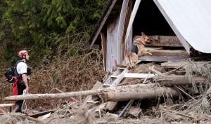 Washington Mudslide dog - 6