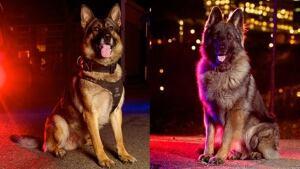 EPS Canine Units