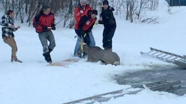 Some Bearspaw residents pulled a deer out of a frozen pond Monday night.