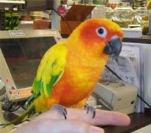 The stolen sun conure bird is worth more than $1,000