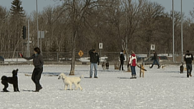 Winnipeggers spilled into parks like this one in Charleswood Saturday, with a forecast high of 6 C.