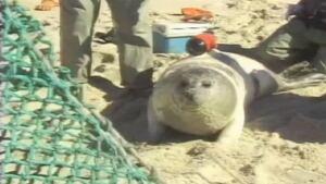 Seal-cam