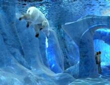 Polar bear exhibit
