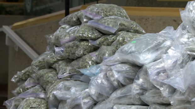 Police showed off the marijuana that was seized after they executed search warrants at three Edmonton homes last week.