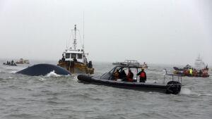 South Korea ferry rescuers