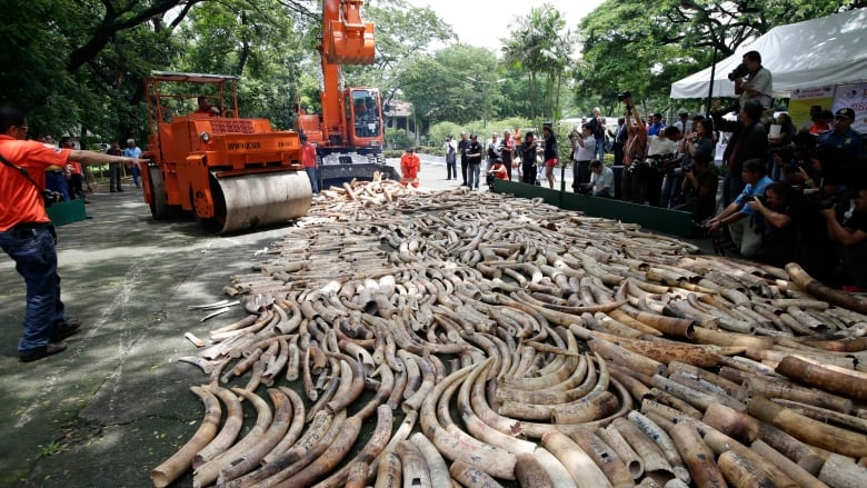 African land grabs fuel illegal ivory trade, report says