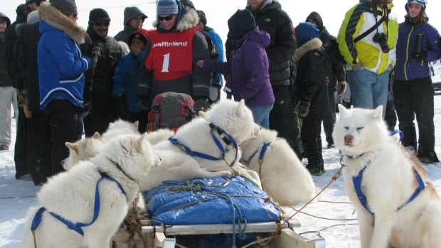 Maren Vsetula, wearing bib no. 1, prepares her dog team for the start of the 2014 Nunavut Quest in Igloolik last Thursday.