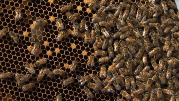 Scotian Bee Honey had about 390 hives going into the winter season, but the cold cut that down to 190.