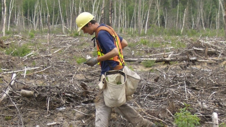 tree planting becoming full time employment for youth cbc news