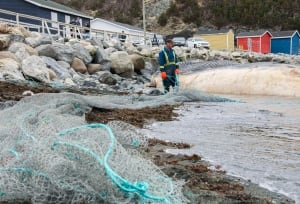 Local crew worker prepares net for blue whale carcass in Trout River