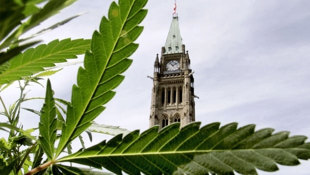 Ottawa Public Health has made 33 recommendations to the federal task force on how to legalize marijuana.