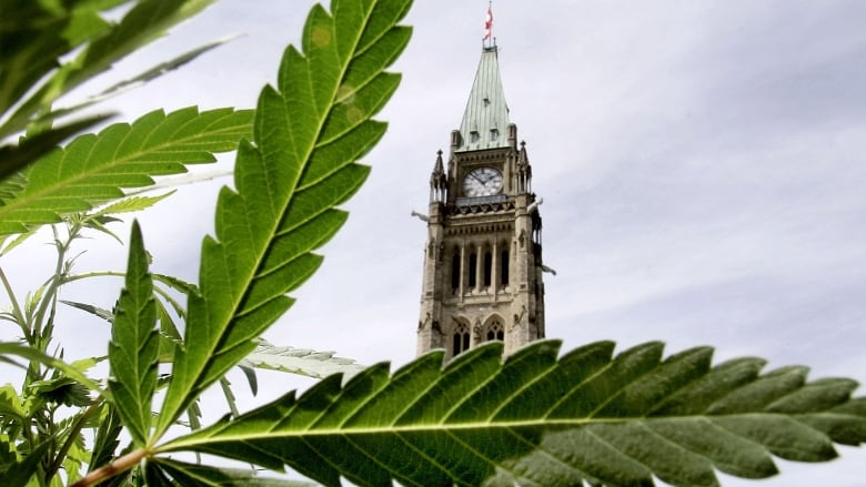 Canada faces choice on international drug treaties over legalized pot