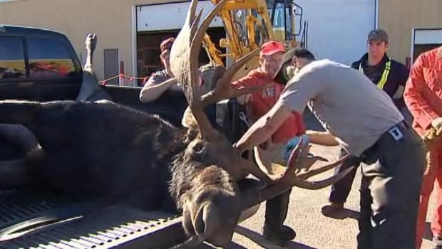 Moose season