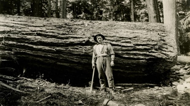 A Douglas fir log in the forest north of Port Haney, B.C. (1933), photographer unknown.