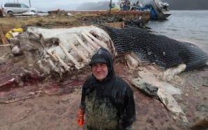 NL Whale Carcasses ROM curator May 10 2014