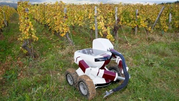 Vineyard robot