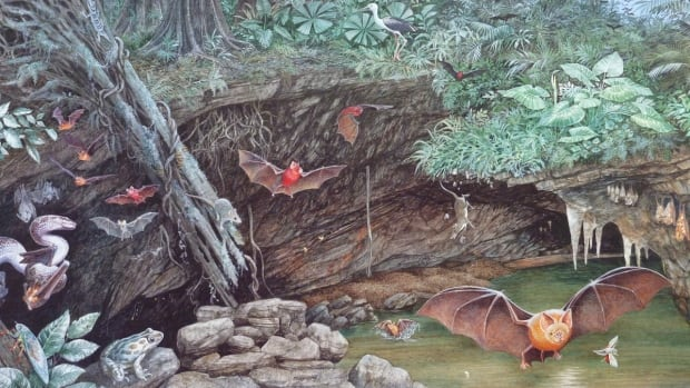 During the early Miocene, the cave where the fossils were found was surrounded by a dense rainforest. Many bats used the cave, which was also a trap for forest animals that tumbled over its edge. There was a pool of water in the entrance chamber where the ostracods thrived.
