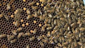 Dead bees in Nova Scotia