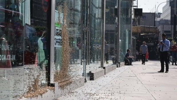 Passersby kepts their distance from a swarm of honeybees that landed on the window of a shop in central London.