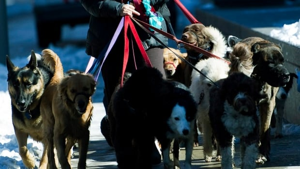 Kijiji Dog Walker Toronto