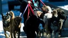 Dog Walker TOPIX