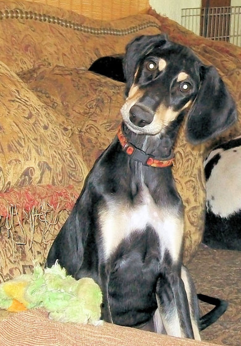 Seizing dogs from Acadia house unjustified, owner's friend