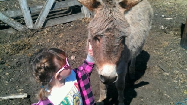 Have you seen this donkey? RCMP say the animal, which was a farmer's pet in Leduc County, was taken on May 12.