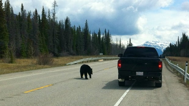 Parks Canada says a photo taken Monday of a couple feeding wieners and pepperoni sticks to a black bear on the highway is not good news for anyone.
