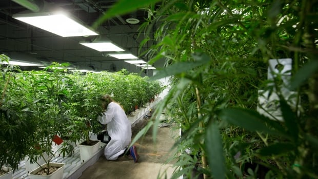 The provincial body that regulates Newfoundland and Labrador physicians warns doctors not to dispense medical marijuana out of their practice.