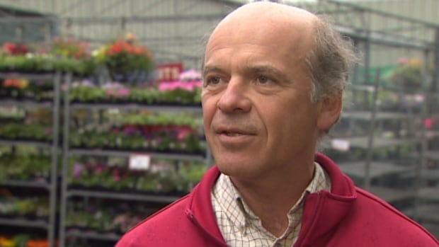 Mike Barclay, the general manager at Halifax Seed, recommends a switch away from the old standby to possible alternatives such as begonias.