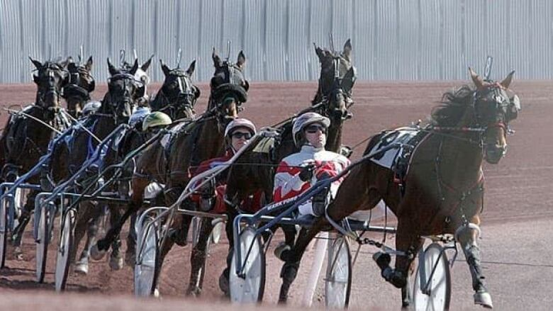 No Horse Racing At Sudbury Downs In 2014 100 Jobs Lost Cbc News