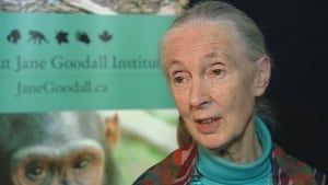 Jane Goodall wants end to breeding program for whales