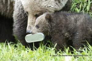 Bear litter