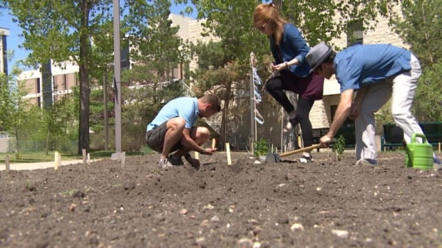 Produce from a large community garden at the University of Regina helps a downtown soup kitchen.