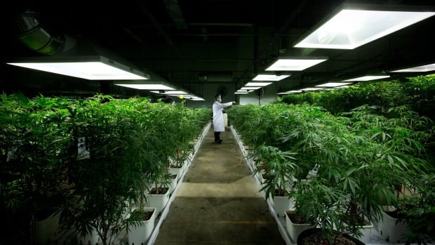 A report to Metro Vancouver's Regional Planning and Agriculture Committee says more study is needed on the property tax implications of large scale industrial marijuana production within cities.