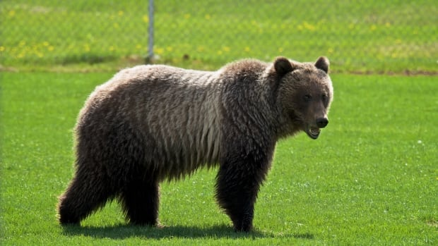 Parks Canada officials say the bears are out — and they are hungry.