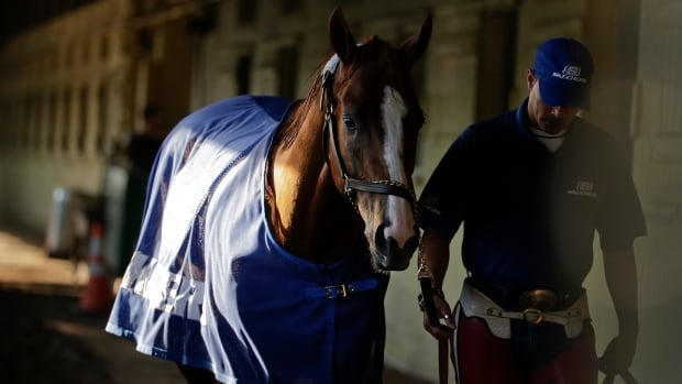 Exercise rider Willie Delgado hot walks California Chrome after a workout Tuesday ahead of his bid in the 146th running of the Belmont Stakes.