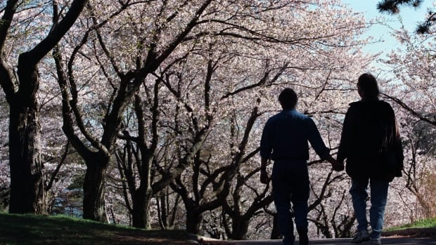Beyond their more nebulous benefits, Toronto's canopy of trees — such as these cherry blossoms in High Park — are worth at least $7 billion to the city, TD Bank says.