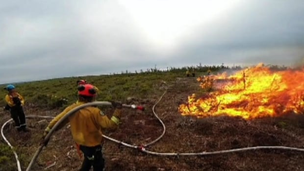 Shrubs ablaze near Paquette Lake Road in Cape Breton Highlands National Park.