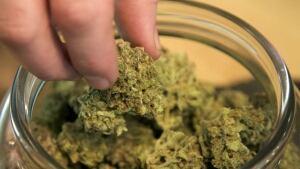 hi-weed.jpg