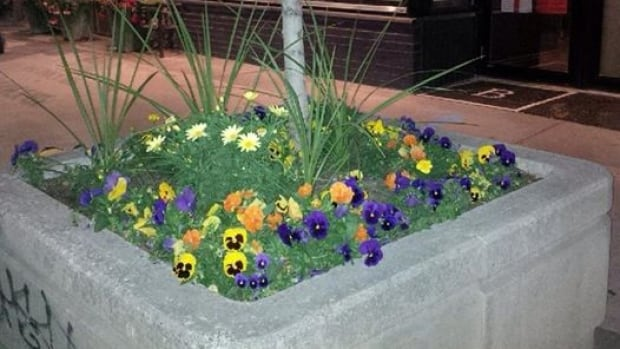 Scene of the crime: The flower box outside the Brooklyn Tavern where owner Cindy Wilkes says flowers were taken.