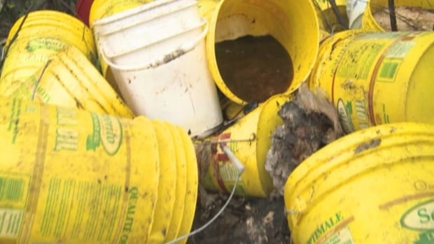 20 buckets of food waste was dumped outside Wabush, and some residents are worried the mess is attracting bears to the area.