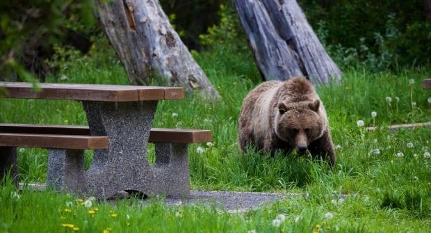 Bear closures