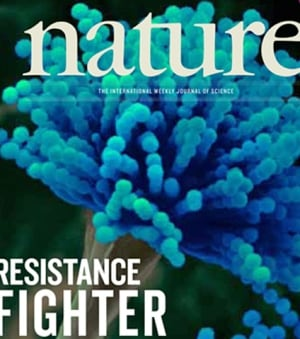 Superbug-disarming fungus