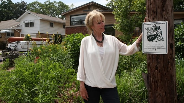 Silvana Valiani has a monarch butterfly way station at her Stoney Creek home, but she's lost a large portion of it because of a new sidewalk.